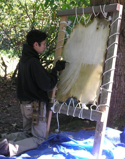 Student scraping a rawhide to expose the 'dermis'