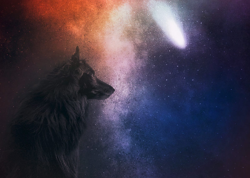 WolfCub the Groenendael and the stars