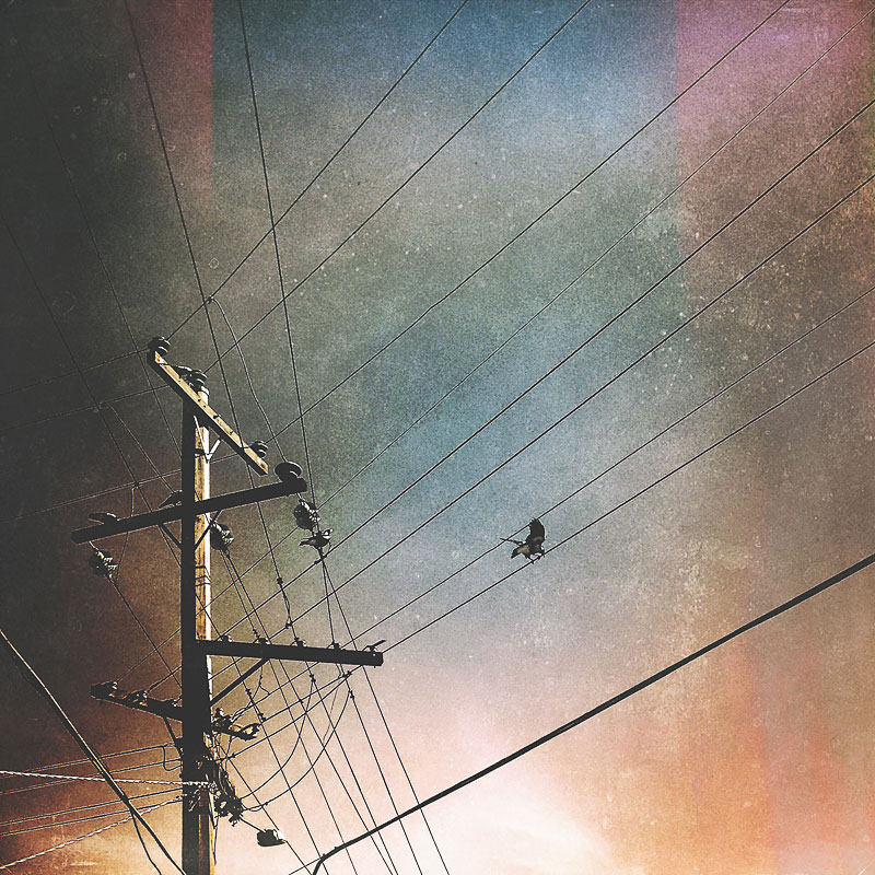 Magpie-taking-off-from-power-wires