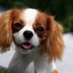10 Extinct Breeds of Dogs