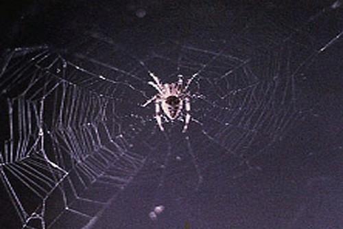 laba-laba di ruang