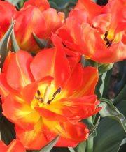 monte orange_2