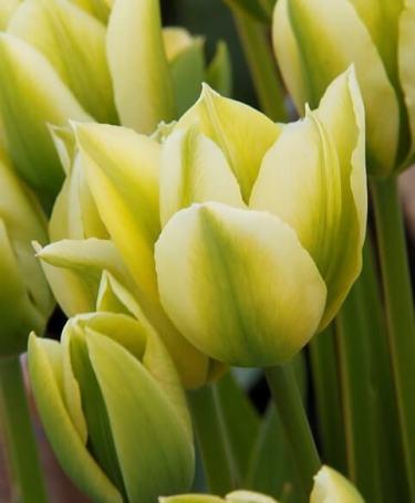 spring green_1