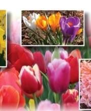 spring_mix_1