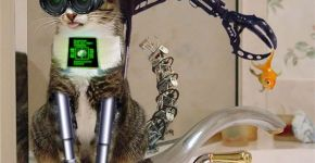 gato cyborg