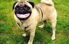 Sonrisa de perrito