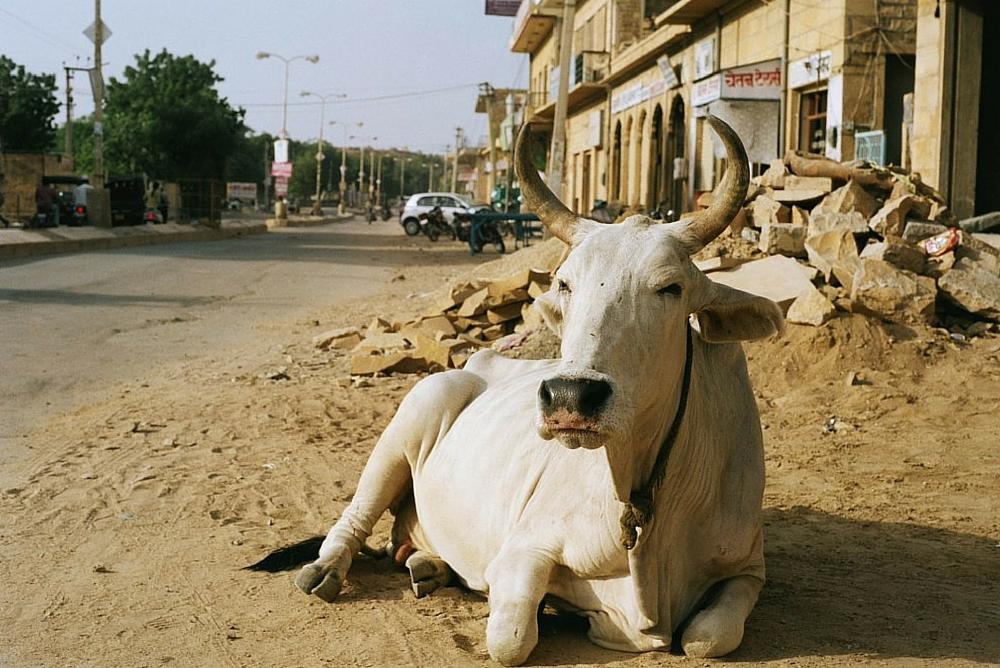India in 20 photos