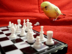 Pensive Parakeet bird game