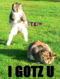 """April Fools Lolcats"" by Self-made derived image from Image:Worak - Attack (by).jpg.cc 3.0"
