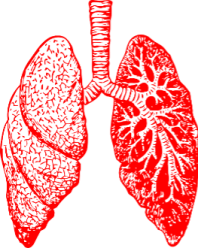 lung lungs  body health