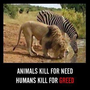 Animals kill for need