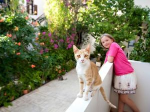 Paleochora cat, Virginia Studios, Crete - @World Travel Mama