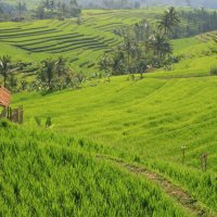 Wandering through Bali's Jatiluwah rice terraces