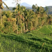 With the clove pickers in Munduk: Trekking in Bali