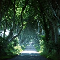 Wandering through the Dark Hedges