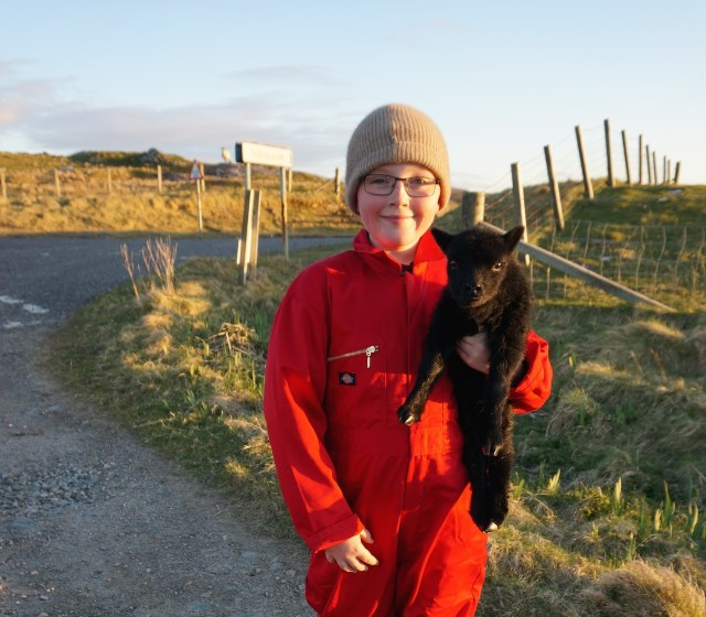 My young crofter helping out with lambing