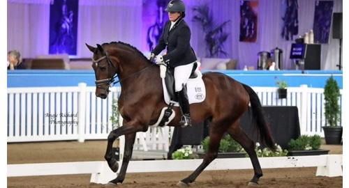 Danielle French Young Dressage Horse Class Prieview