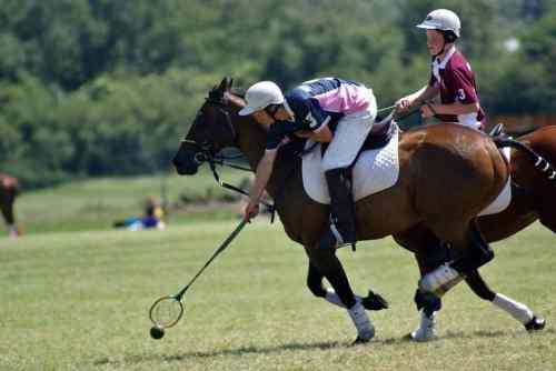 wow saddle (6)