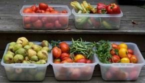 organic_food_garden