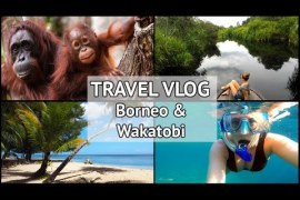 TRAVEL VLOG | My Indonesia Adventure Part 1: Finding Orangutans in Borneo & The Wakatobi Bajo Tribe