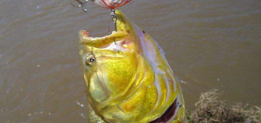 pescar_mejor1