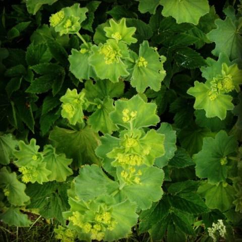German plants:-)