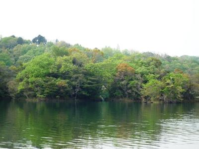 湖に映える新緑
