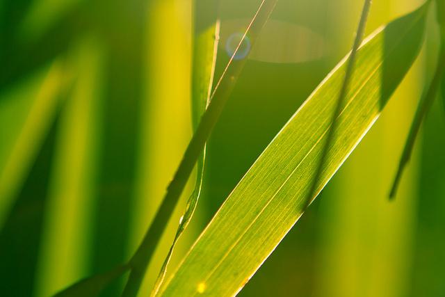 Photographer: Yago Veith www.yago1.com -