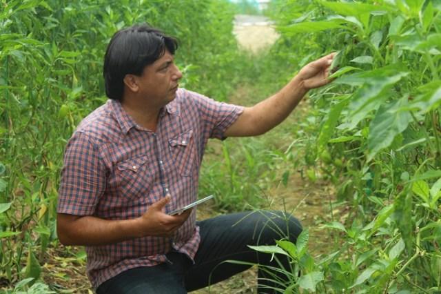 Bitkilerde hastaliklar artik fotograf ile teshis edilecek