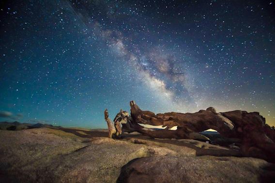 Yosemite-Ansel-Pine-Summers-YExplore-568