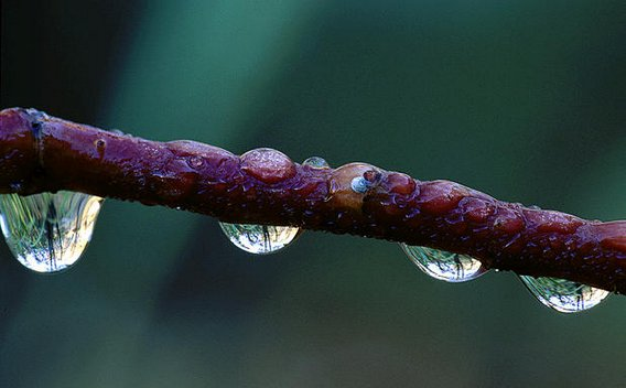 Yosemite-Dewdrops-YExplore-Flint-568