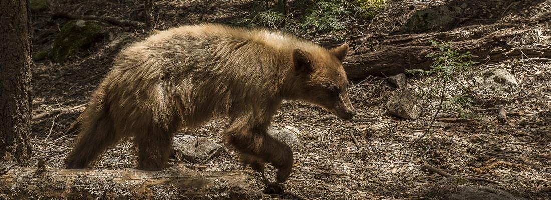Fostering Yosemite Stewardship