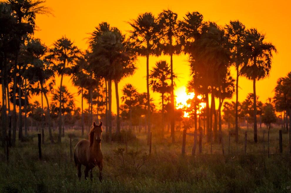 Un caballo sin domar nos observa atento mientras pasábamos durante la tarde por una estancia a kilómetros del Parque Nacional Defensores del Chaco. (Tetsu Espósito)