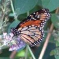 Cocoon to Butterfly: How God Transforms Us