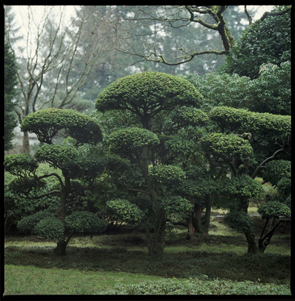 japanesegarden7.jpg