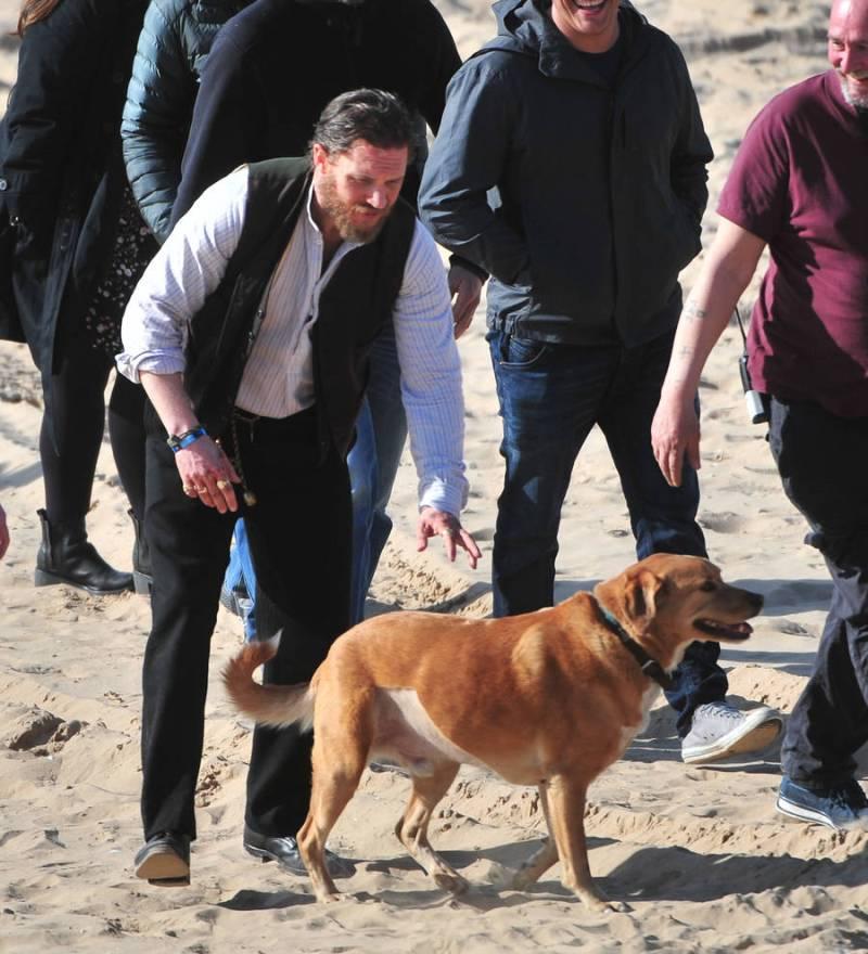 Large Of Tom Hardy Dog