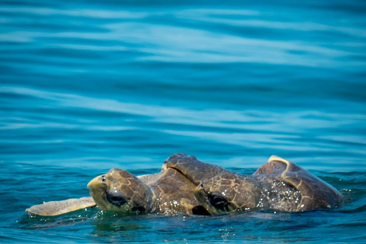 Featured Turtles
