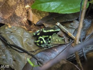 Another Frog