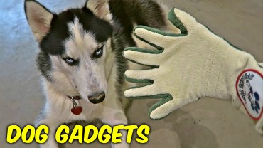 Random dog gadgets put to the test