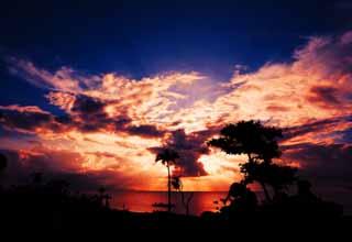 写真,素材,無料,フリー,フォト,クリエイティブ・コモンズ,風景,壁紙,燃える南国シルエット, 椰子の木, 夕日, 雲, 海