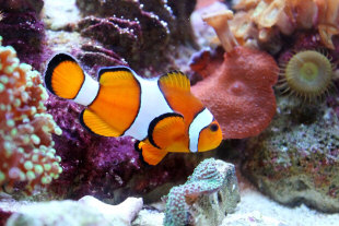 salt water fish are amazingly beautiful if you already have experience