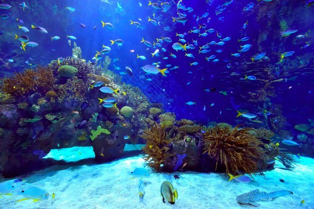 Types Of Saltwater Aquarium Fish Saltwater tank. saltwater fish