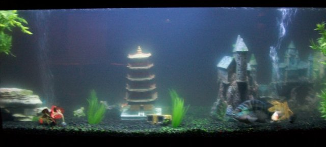 Cloudy Fresh Water Aquarium