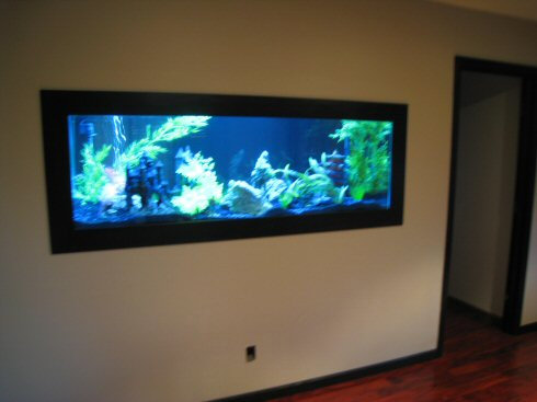 Amazing In Wall Fish Tank