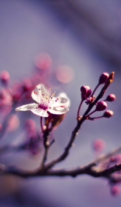 Branch, Macro Desktop wallpapers 600x1024