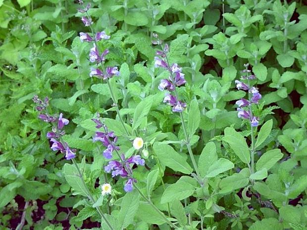 BOŽIJA BILJKA, MOŽE SVE: Ovo je jedna od najzdravijih biljaka na planeti, a uopšte je ne primećujemo