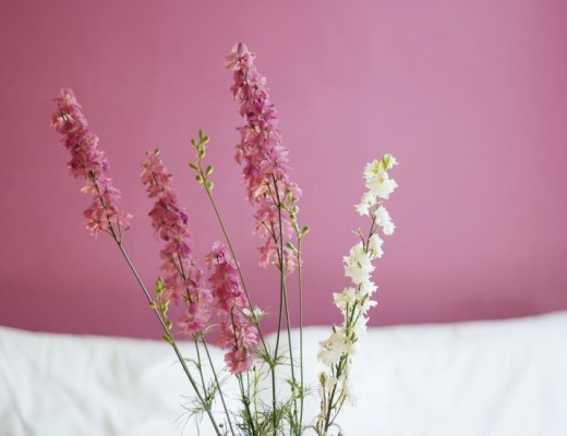 flowers-pink-2827-825x550