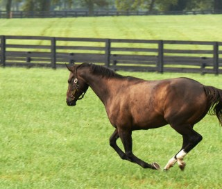 Zenyatta enjoying time in her paddock.