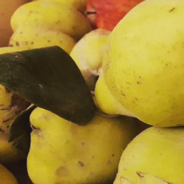 La cenerentola delle nostre campagne la mela cotogna con lahellip