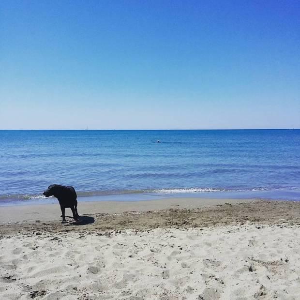 In spiaggia non c neanche un cane
